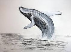 Image result for whale drawing