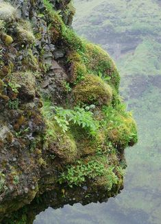 This photo from Reykjavik, Reykjavik is titled 'Human Face'. Green Man, Things With Faces, Dame Nature, Unique Trees, Hidden Face, Strange Places, Rock Formations, Optical Illusions, Natural Wonders