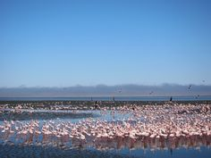 Flamingo Point Walvis Bay Namibia