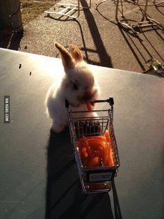 Tiny bunny pushing a tiny shopping cart full of tiny carrots