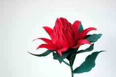waratah, crepe paper flowers..gorgeous http://papetal.blogspot.com.au/p/flowers_13.html