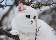 Cute Cat Photography: Pretty white cat!
