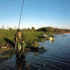 Rotaugen Angeln, Reviere, Taktiken und Köder.  Rotaugen Angeln mit den unterschiedlichsten Methoden, dem Waggler-Floß, der Zitter und der Schwingspitze, mit Gleitposen und leichten Bodenblei-Montagen.  Erinnern Sie sich noch an Ihren allerersten Fisch? Wenn es kein Barsch war, kann es nur ein Rotauge gewesen sein – mit dem für viele Jugendliche das Angler Leben beginnt.  http://www.angelstunde.de/rotaugen-angeln/
