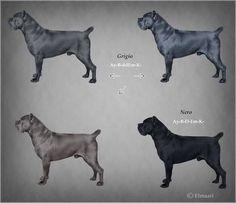Risultati immagini per cane corso