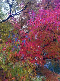 Fall in Southern Helsinki