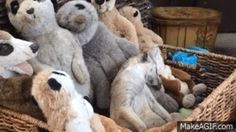 This Meerkat Falling Asleep in a Basket of Stuffed Meerkats Is Everything
