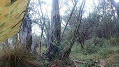 Waking up near Rendezvous Creek in Namadgi National Park