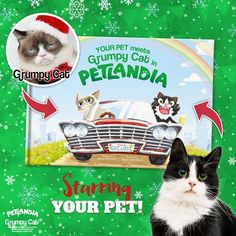 20 minutes until you miss #Christmas shipping? GOOD. #lovecats #furry