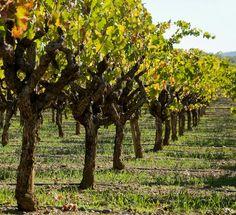 Sonoma Wine Valley, Ca