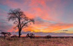 Kgalagadi Sunrise Photography, Wildlife Photography, Funny Emoticons, African Paintings, Natural Park, Sunset Colors, Photo Tree, Fantastic Art, Pictures To Paint