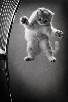 """""""One of Widget's kittens learns to fly """"  Photographer Nateletro. S) The Night Circus"""