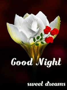 New Good Night Images, Lovely Good Night, Good Night Love Quotes, Romantic Good Night, Good Night Friends, Good Night Gif, Good Night Wishes, Good Night Sweet Dreams, Good Morning Images