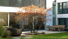 Garten modern_Felsenbirne_Amelanchier