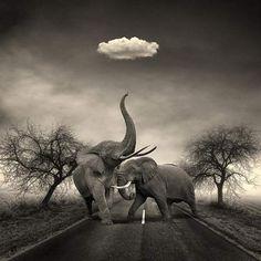 Surreale Fotografia in bianco e nero di Michael Ticcino