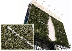 Coca-Cola's Green Billboard Made of Plants That Absorb Air Pollution | Adweek