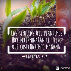 Gálatas 6:7 No os engañéis; Dios no puede ser burlado: pues todo lo que el hombre sembrare, eso también segará.♔