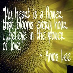 Flower by Amos Lee