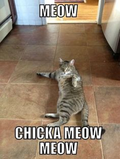 @Kelly Teske Goldsworthy Teske Goldsworthy Cook - made me think of you! Meow Chicka Meow Meow So funny!