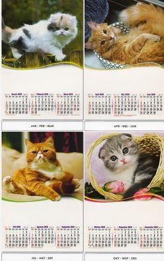 Kalender 2016 - 3 Bulanan Pro - Kucing Cantik