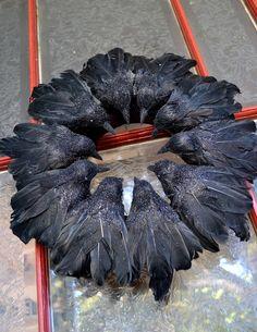 DIY Elegant Raven Wreath from Dollar Store Black Birds - Costs Under 12 Bucks to Make!