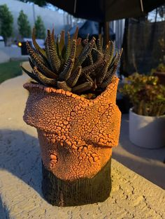 Haworthia by Rose Vittori in The Succulent Eclectic Community Indoor Succulents, Lower Lights, Planter Pots, Community, Rose, Outdoor, Outdoors, Pink, Outdoor Games
