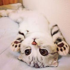 Un piccolo peluche Bum, il gattino preoccupato George, amabilmente ridicolo Un gattino che dorme felice in posizione Yoga Daisy in mezzo alle bolle di sapone Che bel panzerotto! Ecco il gattino-pipistrello ...tutto da sbaciucchiare Ti vedo, sai! Questo gattino era solo e abbandonato in... #gattini