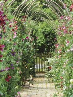 Sweet peas might not manage the lovely arch, but every garden needs these