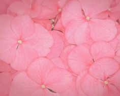 Pink Screensavers Pink Cotton Candy, Pink Petals, Art Clipart, Flower Wallpaper, Hd Wallpaper, Color Of Life, Green Flowers, Pink Roses, Artist