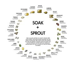 Soak and sprout chart