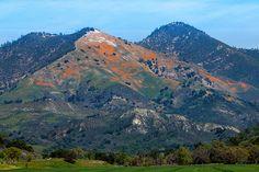 santaynezvalleystar | Wildflowers of the Santa Ynez Valley  #wildflowers #californiapoppies #grassmountain #losolivos #santaynezvalley #syvstar