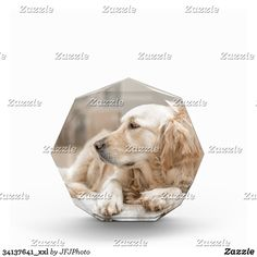 34137641_xxl Showcase Design, Printing Process, Awards, Vibrant, Animals, Color, Animales, Animaux, Colour