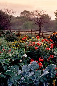 Autumn Garden kale, datura, dahlias, fence, sky, vegetables and flowers growing together