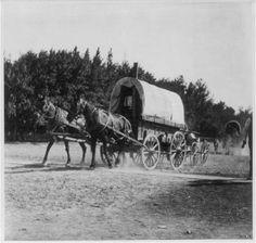 Pocatello, Idaho land rush, 1903: mule-drawn covered wagons on move