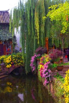 A large weeping willow tree with colorful plants and flowers next to a river.....how pretty!