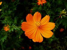 tagamitazuki: fleurs en bordure de route # 7