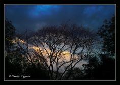 Golden Hour : Beautiful Tree