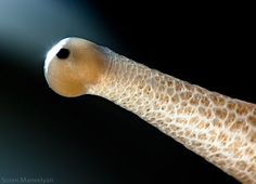 Another of Suren Manvelyan's amazing macro photographs of animal eyes.  This one?  A snail's!