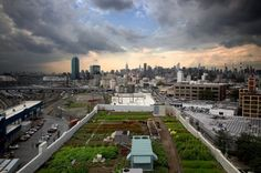 New York City Council passes two bills to encourage urban farming & rooftop greenhouses. #sustainability #homesteading #urban