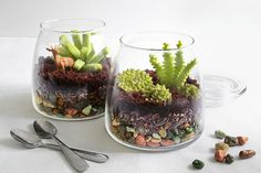 How-Tuesday: So baust du ein (essbares!) Terrarium on Etsy