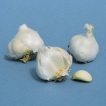 California White Garlic -An easy-to-grow strain acclimated to northern conditions. The large bulbs can be separated into cloves that are planted the same as onion sets. A bulb makes 10 to 20 cloves. One package contains 3 bulbs.