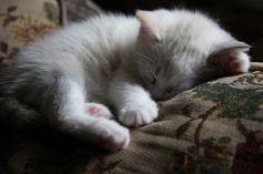 a nap (Photo by ivanooze, via Flickr)