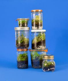 Jam Jar as a Terrarium | Smart ways to repurpose parchment paper, cupcake liners, a vegetable peeler, and more.
