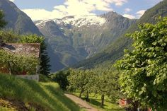hardanger, norway. heaven on earth, not even kidding