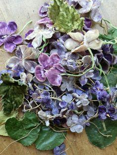 Todolwen: Violets ... Sweet Violets