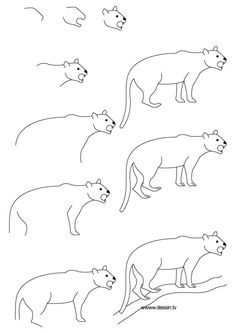 panther drawing draw step animals zoo easy sketch very drawings simple dessin learn templates jungle everyone cat thedrawbot template florida