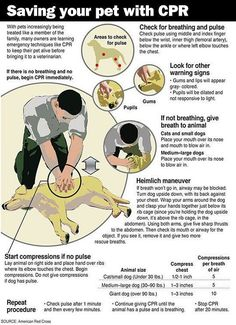 Every Pet Owner Should Learn This, Saving your pet with CPR.