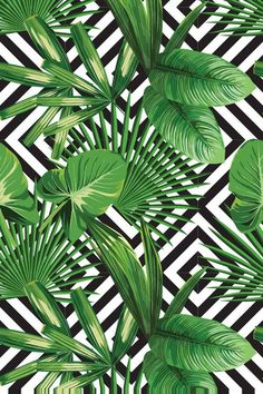 tropical palm leaves pattern, geometric background Wallpaper ✓ Easy Installation ✓ 365 Day Money Back Guarantee ✓ Browse other patterns from this collection! Vinyl Wallpaper, Wallpaper Backgrounds, Iphone Wallpaper, Latest Wallpaper, Blog Backgrounds, Bathroom Wallpaper, Textures Patterns, Print Patterns, Pattern Print