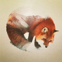 Very happy about how this turned out #fox