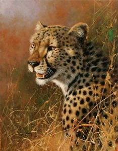 HD oil painting Prints on canvas,sweetveld,The hungry cheetahs,African leopard African Leopard, Portrait, Cheetah Animal, Paint By Number Kits, Cheetahs, African Animals, Wildlife Art, Lynx, Animal Paintings
