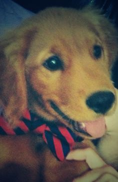 Raising the frat hound the right way. Bow ties or no ties. TFM.
